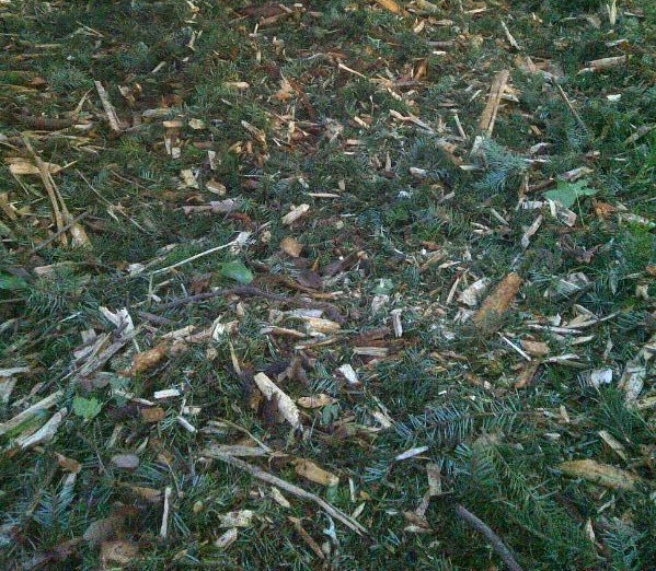Wood chips with fir needles