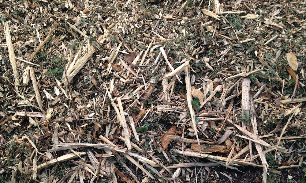 Wood chips with pine needles