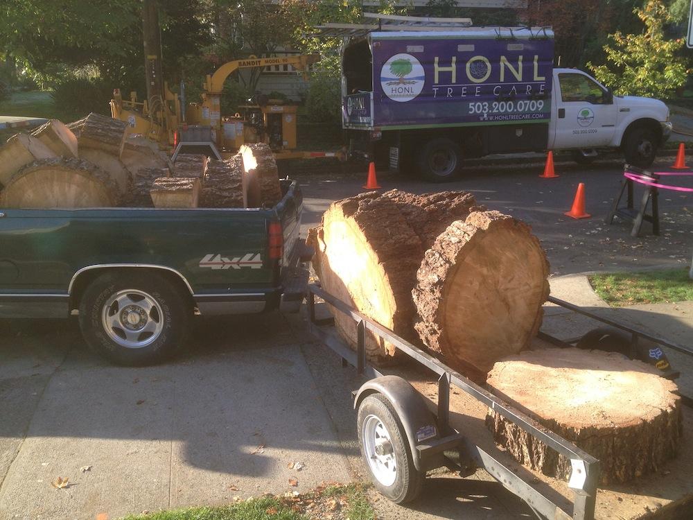 Large Doug Fir Logs